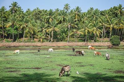 What makes Goa home