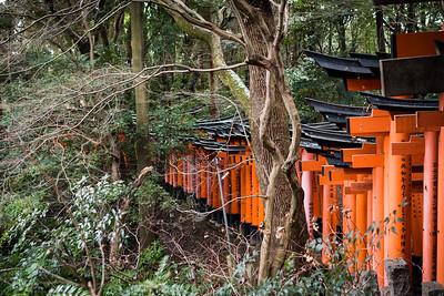 Red Tori gates in the bush