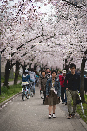 In and around Osaka Sakura in Japan (桜 or 櫻; さくら)