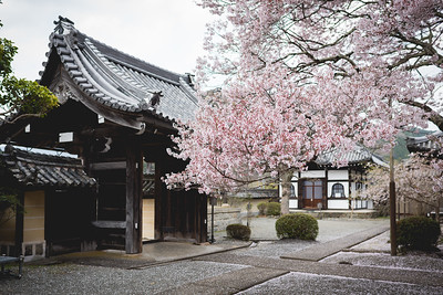 Honzenji Temple or 本善寺