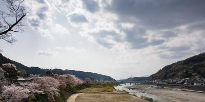 Sakura in Japan (桜 or 櫻; さくら)