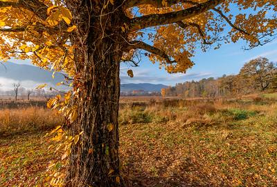 Fall 2016 Smokey Mountains