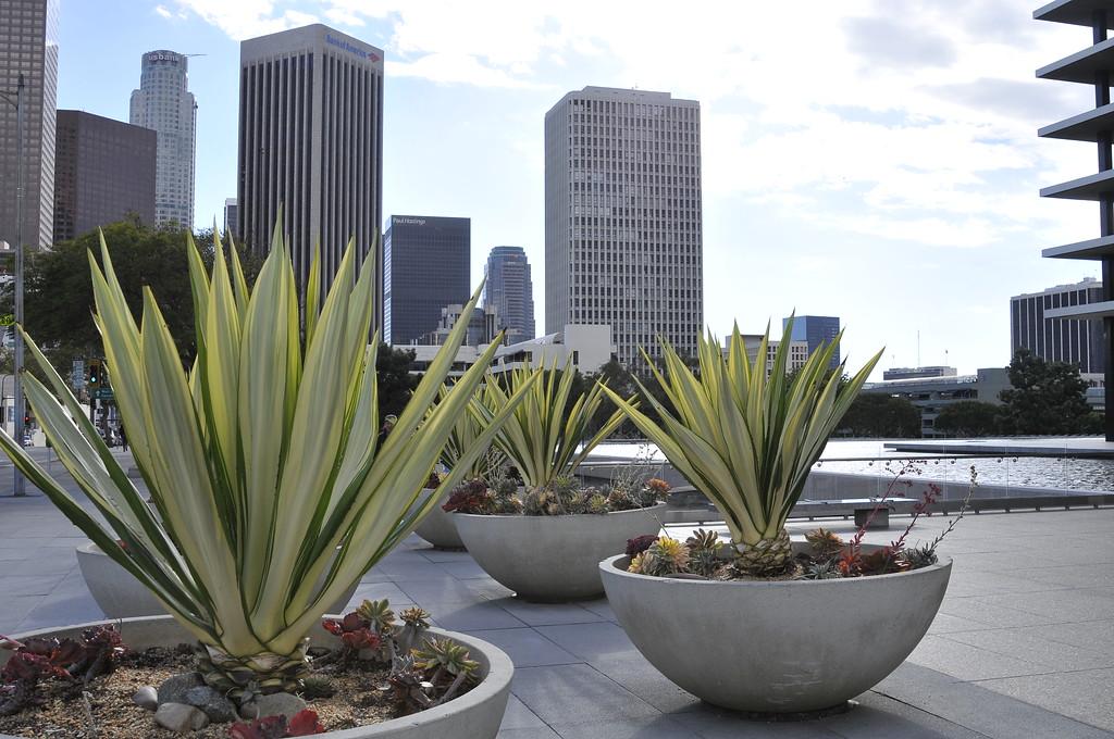 Downtown LA_054