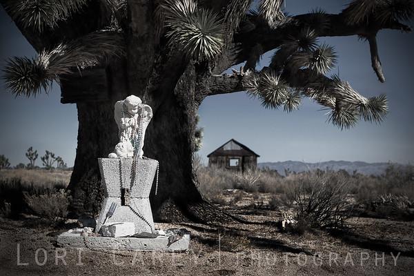 © Lori Carey, All Rights Reserved. Cima, California