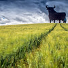 Osborne bull on a wheat field, long exposure shot, Castilleja del Campo, Seville, Spain. The Osborne bull is a 14-metre (46 ft) high black silhouetted image of a bull in semi-profile. It is a former roadside advertising sign of the Osborne Sherry Company, and nowadays it has become a kind of national symbol in Spain.