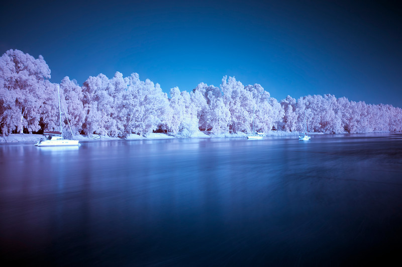 Guadalquivir river, Gelves, Seville, Spain. Infrared image, red and blue channels were changed in the edition process.