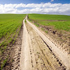 Track through a wheat field, rural area in the province of Seville, Spain