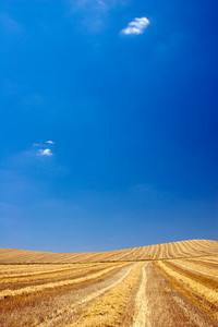Harvested field, Spain