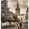 The Giralda Tower as seen from Patio de Banderas square, Seville, Spain. Taken with tilted lens to get shallower depth of field and digitally edited to look like an old print.