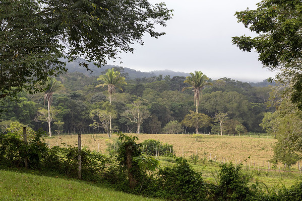 San Lorenzo Farm in San Ignacio, Belize