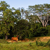 San Lorenzo Farm in Belize