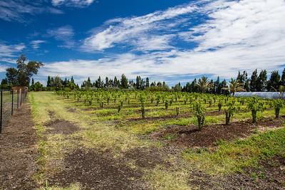 Aikane Coffee Plantation in Hawaii