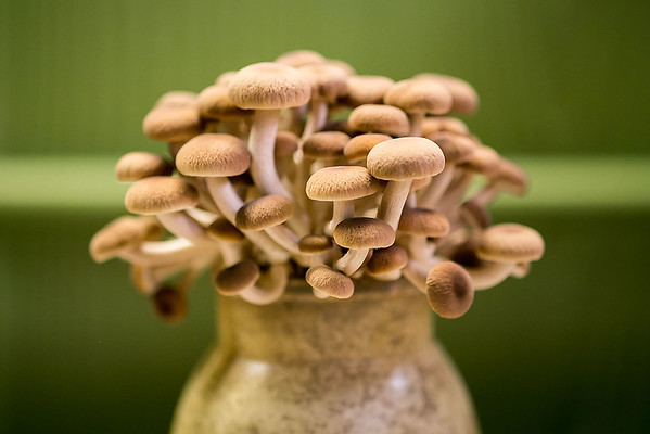 Hamakua Mushrooms in Hawaii