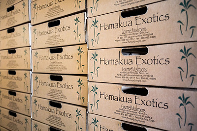 Hamakua Mushrooms in Hawaii