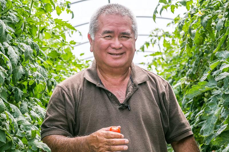 Hamakua Tomatoes in Hawaii