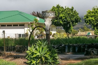 Hirabara Farms in Hawaii