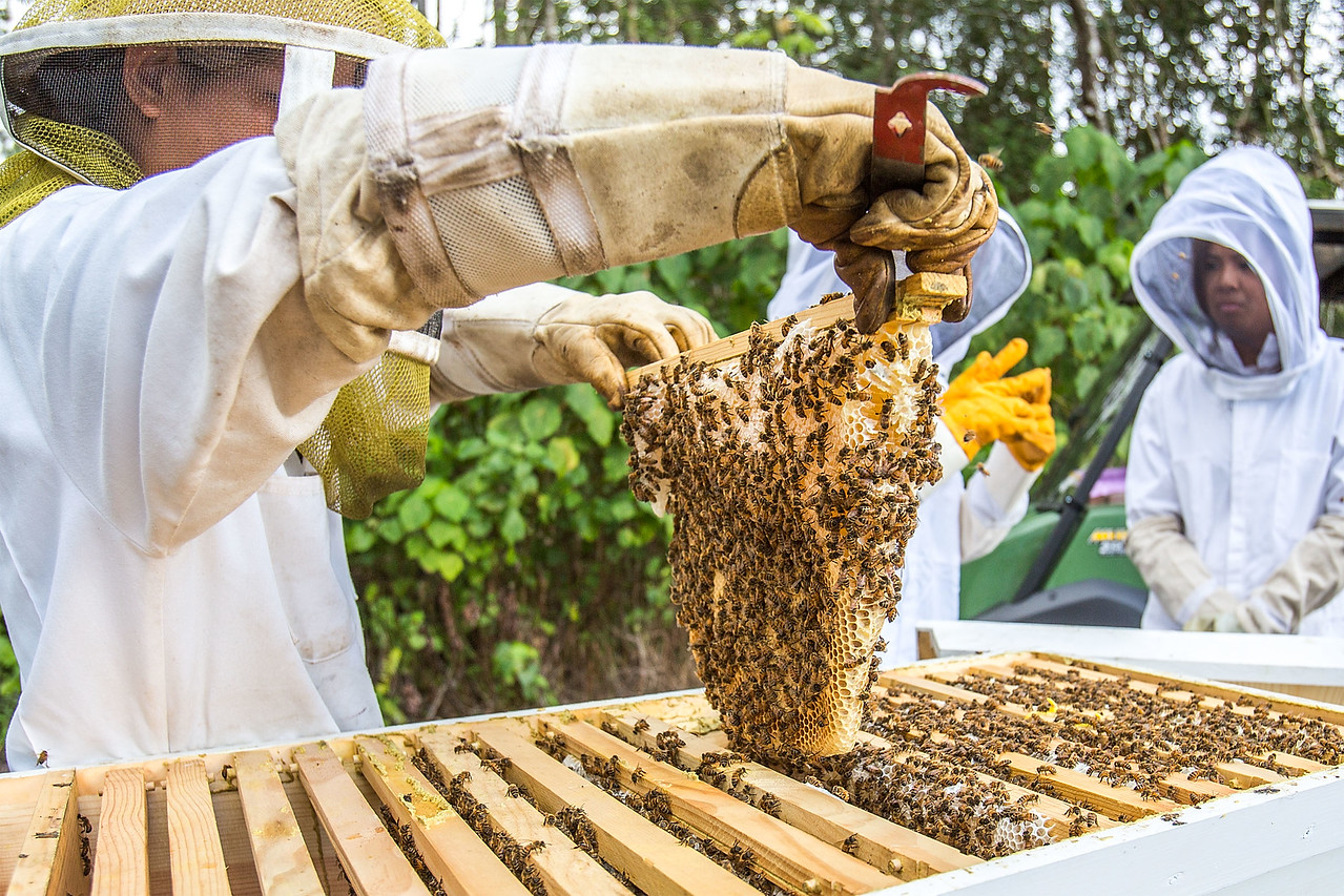 University of Hawaii Hilo - Beekeeping