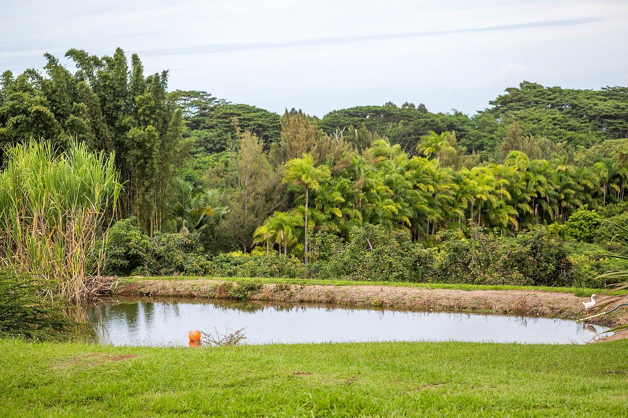 Wailea Agriculture in Hawaii
