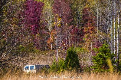 truck graveyard_110317_0023