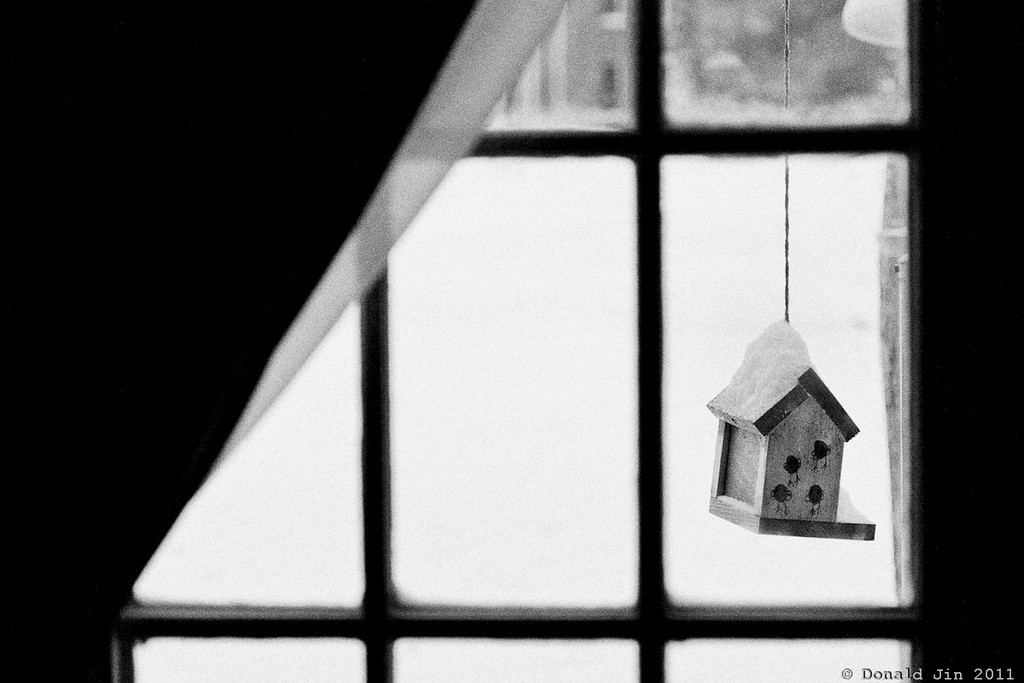 Day 181:  Dani's Birdhouse<br /> This little birdhouse hangs right outside our living room window.  It's pretty to look at but not many birds come by to feed from it.  It was made by Dani when she was in pre-school.  She couldn't have been more than three or four years old.  She's thirteen now.  I told Dani more birds might come by if she filled it with bird food.