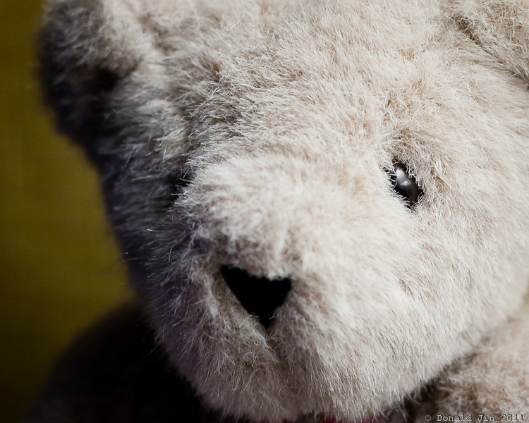 "Day 211: Vermont Teddy<br /> His tag reads ""Proudly conceived, made and sewn in the United States of America."""