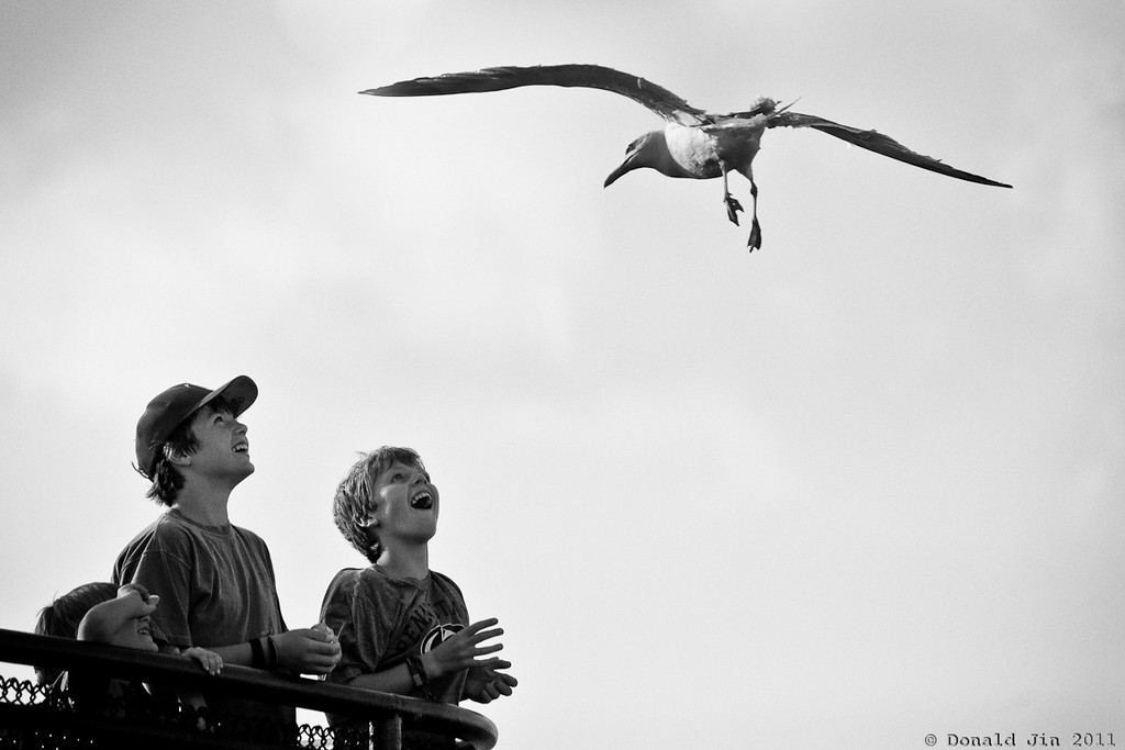 Day 364: Joy of Flying<br /> This seagull was persistent in putting on a show for this small audience.  I was more captivated by the expressions on the faces of these boys than what the bird was doing.