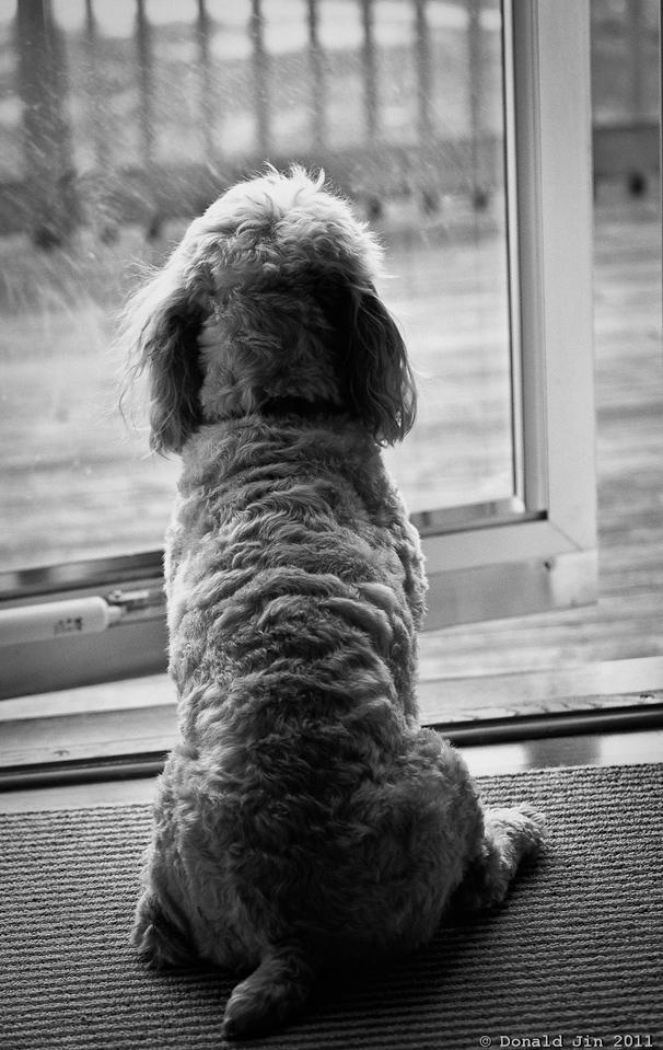 Day 247:  The Sentinel<br /> Scooter likes to look out the back door and stay on top of all the comings and goings in the neighborhood and keep his eyes on the bird feeder for any unwanted furry friends.