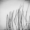 Day 358: Reeds in Water<br /> My fascination with shadows and reflections continues.