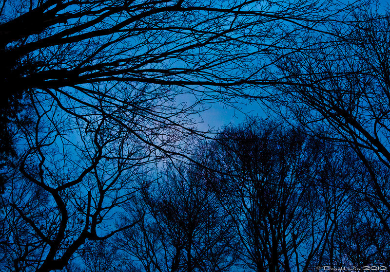 Day 151: Winter Sky<br /> Looking up at the cold winter sky through the naked trees in my backyard.