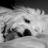 """Day 163: Snooze<br /> """"Five more minutes, please..."""""""