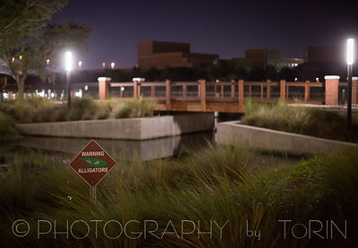Tampa-006-TNO_3639