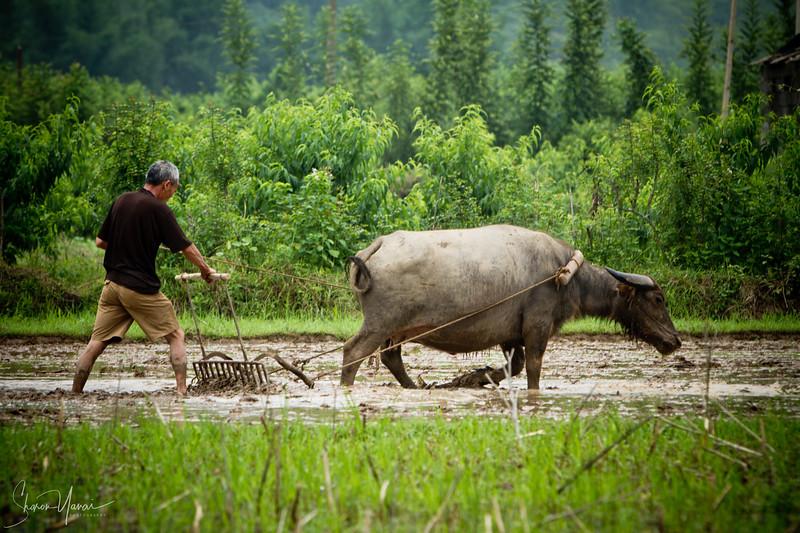 איכר בכפרים של יאנגשו, סין