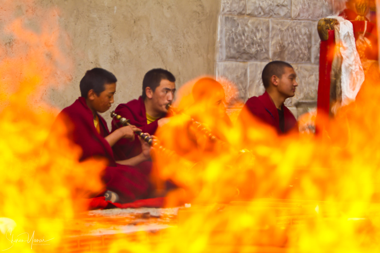 Buddha Monks, Shangrila, China