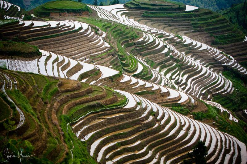 טרסות האורז, לונגשאנג, סין