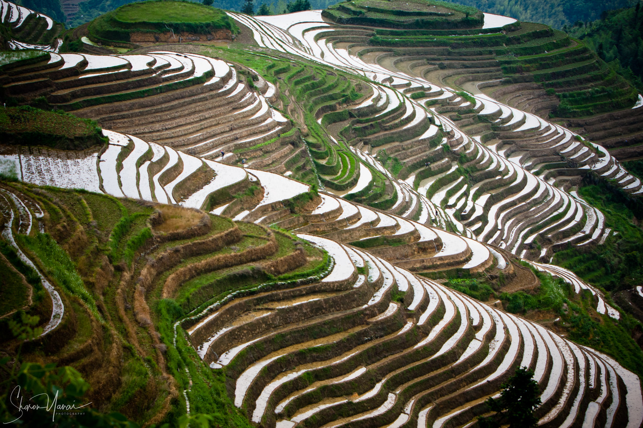 Rice Paddies, Longsheng, China