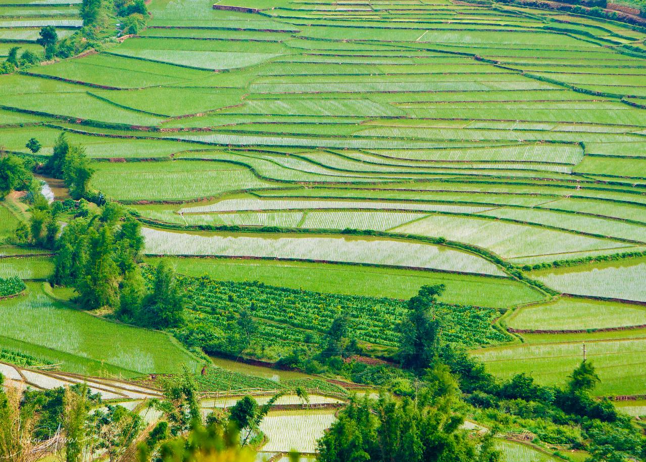 טרסות האורז, יונאן, סין