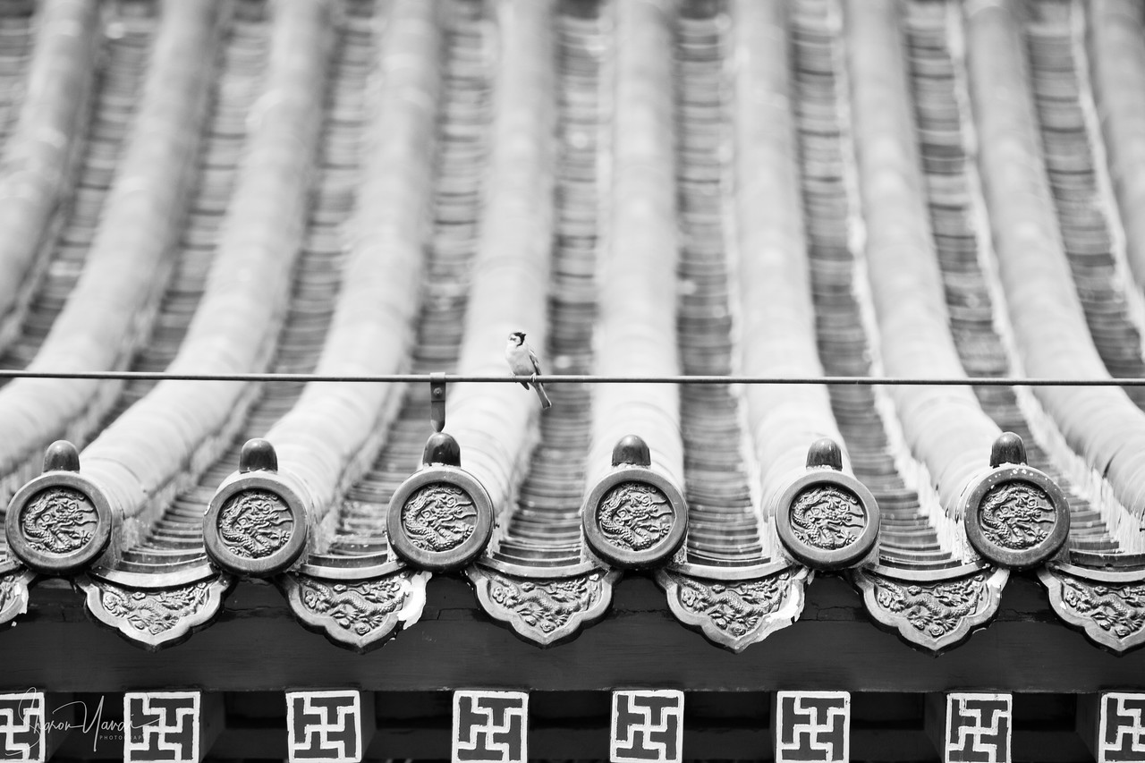 Decorated Chinese Roof, China