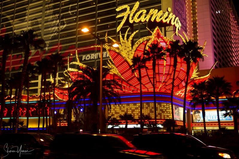 Night over the Flamingo Hotel, Las Vegas, Nevada, USA