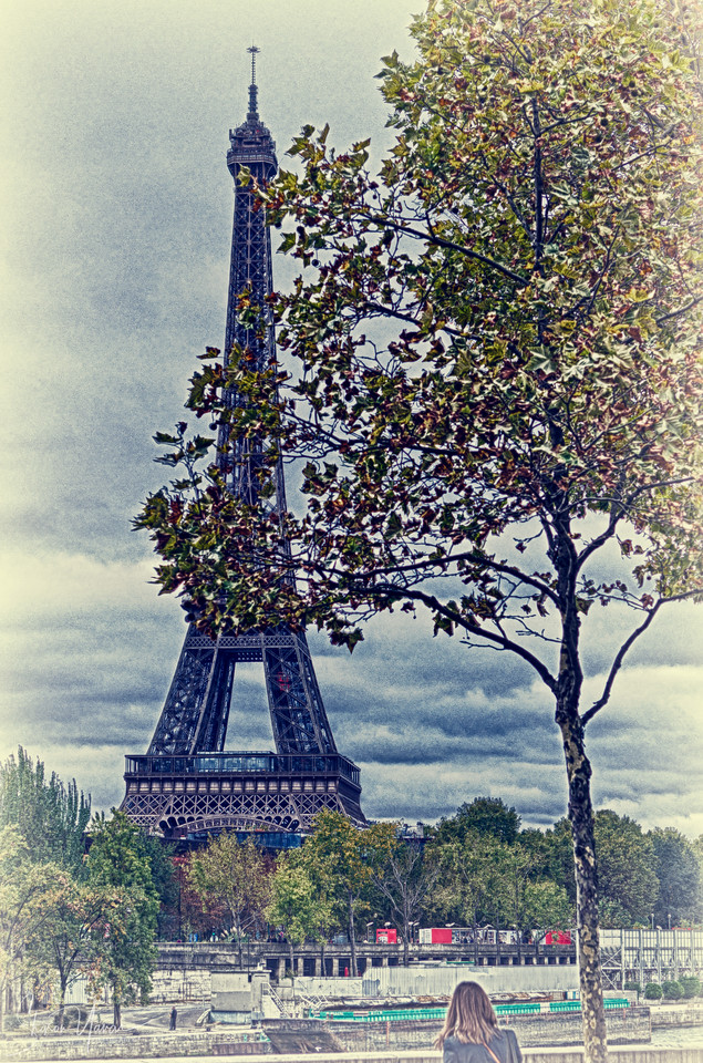 Eiffel tower behind the tree, Paris, France
