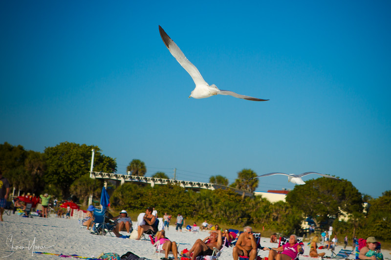 Seagull flying above the people on the beach