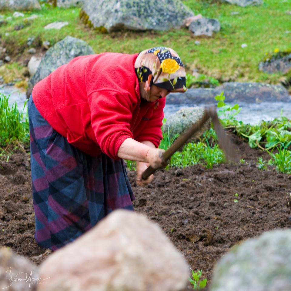 Woman working in the field, Kachkar, Turkey
