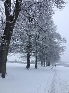 Mortomley Park