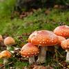 Fungi In the Park