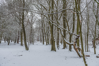 South Weald Country Park, 28 February 2018, Essex, England