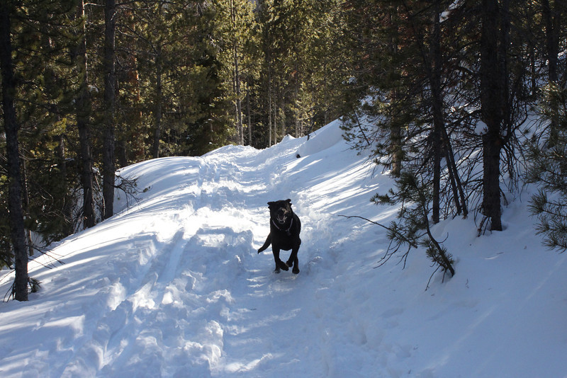 Snow Shoeing trip in January of 2014 to the Blue Lake Trail.  As you can see...Bailey is having a GREAT time!  <br /> <br /> Needless to say on the trip down the hill, she slept!