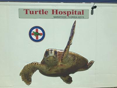 Sea Turtle Center
