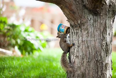 Skippy the Squirrel Climbs a Tree