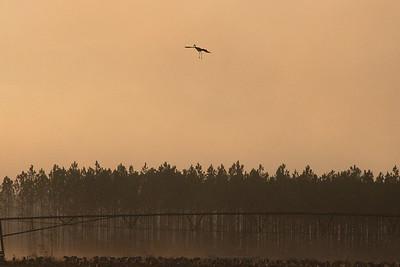 lakelandbirds-11