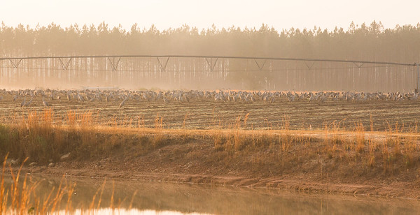 lakelandbirds-12