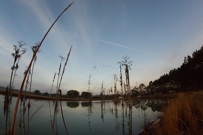 lakelandbirds-5